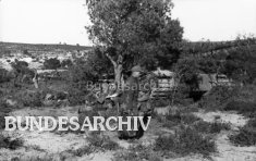 Operation Eilbote : Tiger 121 concealed under a tree