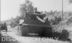 Thumbnail image: Tiger at Biazzo Ridge