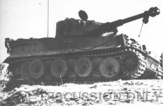 Tiger 231, right view