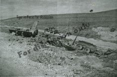 Remains of 231
